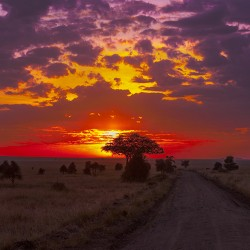 Road Toward Serengeti Sunset