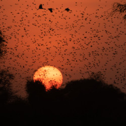 Where Birds Outnumber Humans