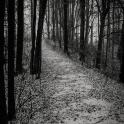 The Path at Midnight