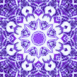 Red Cabbage Kaleidoscope
