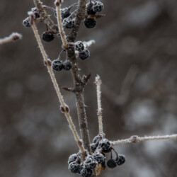 Rime Frost