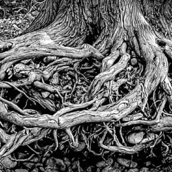 Rooted on The Rock
